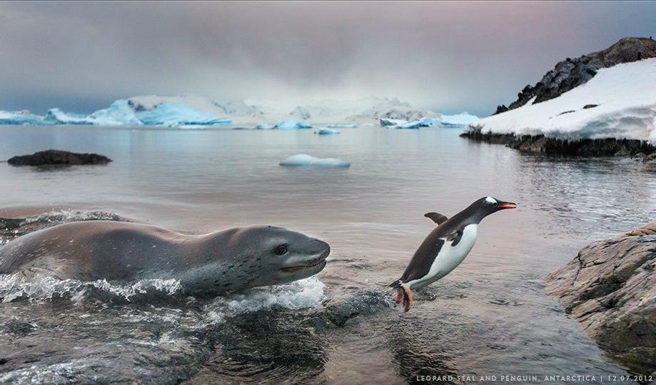 Paul Sonder_Antarctica_Hunt