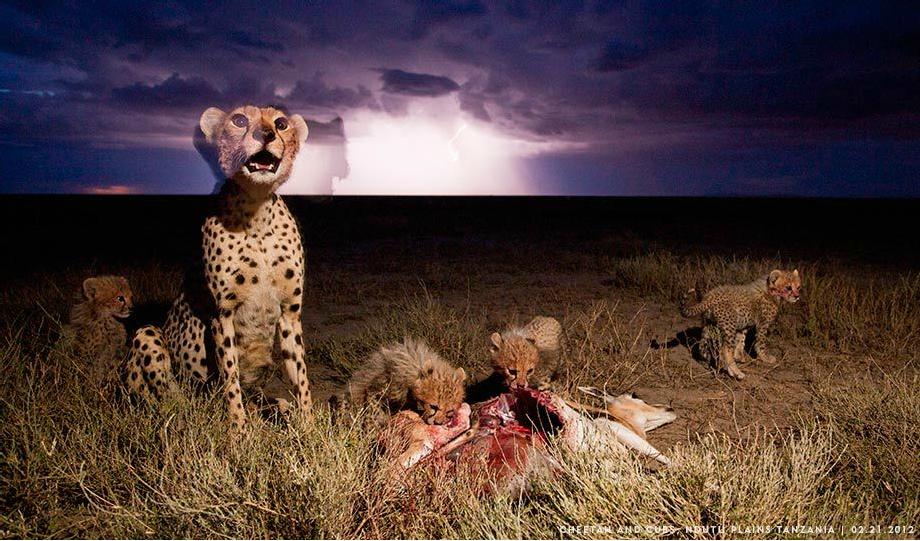 Paul Sonder_Tanzania_Cheetah